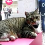 O gato da vitrine