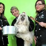 A ideia dessas empresárias é oferecercomida natural para cachorro