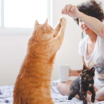 A paixão por felinos inspirou essa publicitária, que tem uma empresa de babás de gatos
