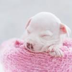 As fotógrafas que se especializaram em pets fazem até newborn