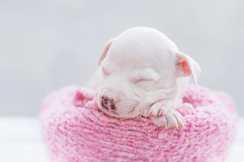 Foto: Click Pets