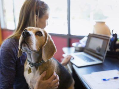 Pet day para reduzir estresse e ansiedade nas empresas