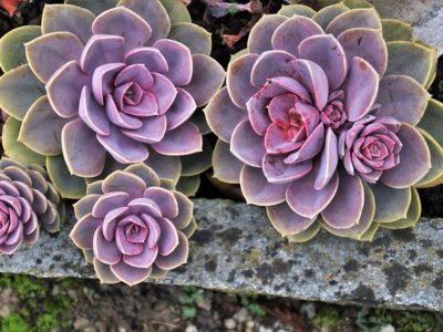 7 plantas e flores para estimular o home office